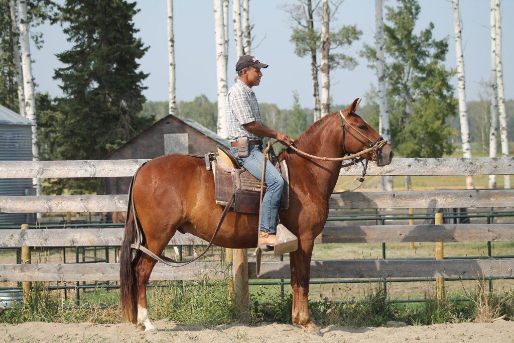 Sale Horses